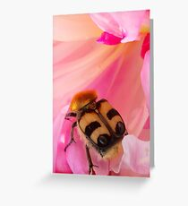 Bee Beetle Greeting Card