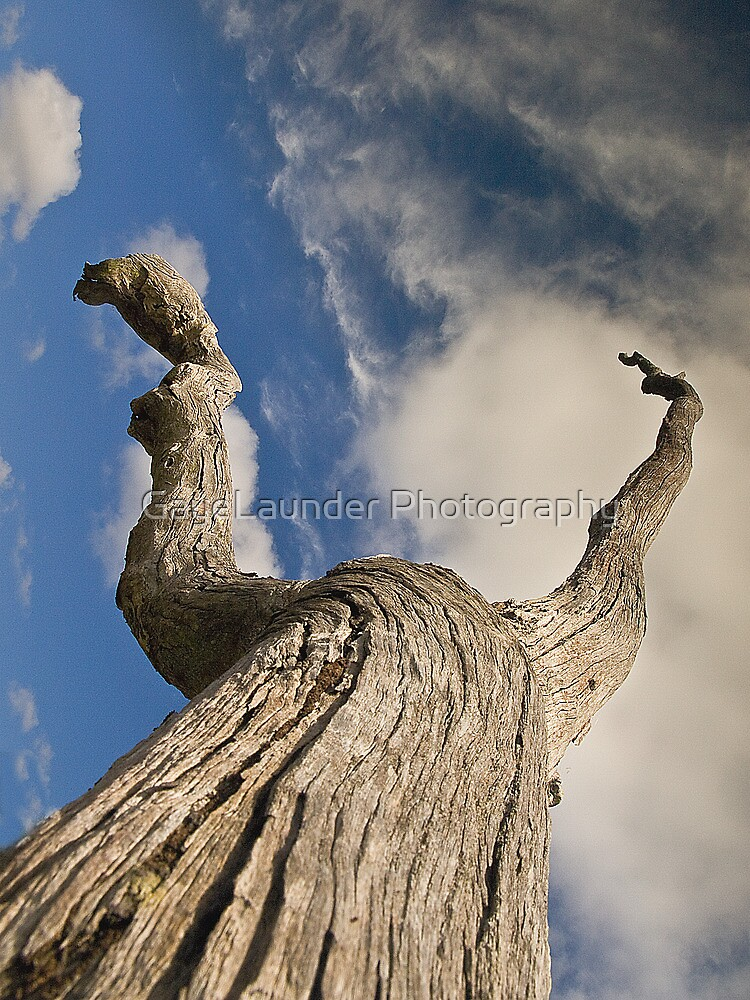 Reach for the Sky by GayeLaunder Photography