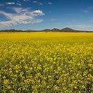 Canola & You Yangs by Timo Balk
