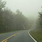 Talladega Forrest : Alabama   by Elizabeth Rodriguez