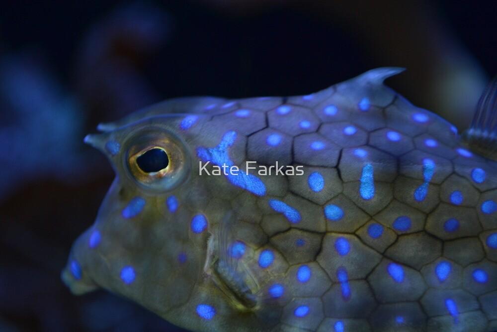 Tropical Fish at the Seattle Aquarium by Kate Farkas