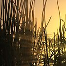 Reed between the lines by Gary  Davey (Jordy)
