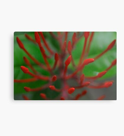 Red needle in bottom of green heart...: On Featured work: Nikon-d90-users Group  Metal Print