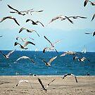 Birds by Mark Martsolf