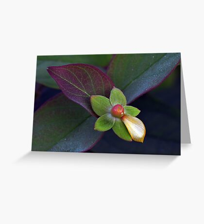 Natures Perfection Greeting Card