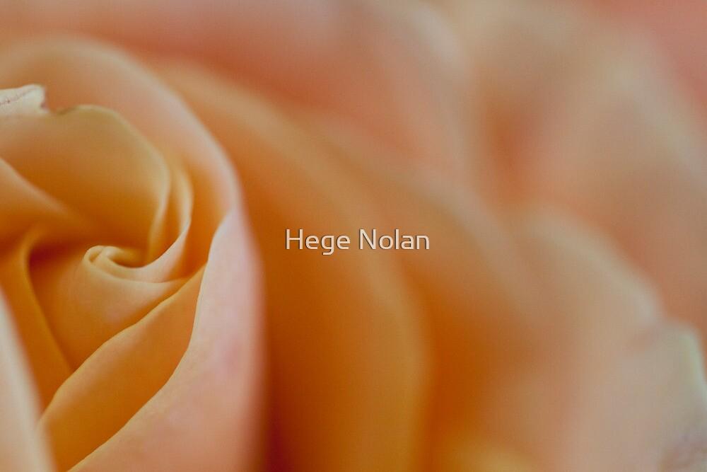 Rose in repose by Hege Nolan