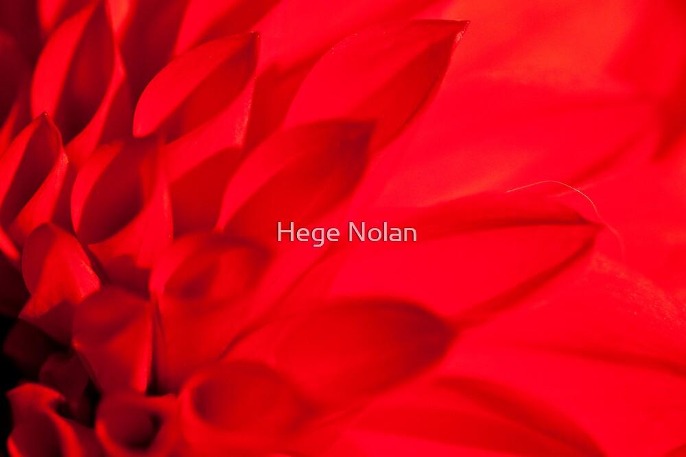 Darling Dahlia by Hege Nolan