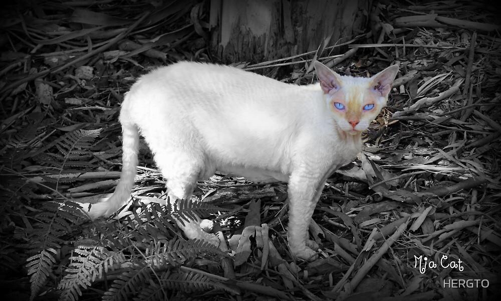 Mia Cat by HERGTO