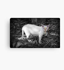 Mia Cat Canvas Print