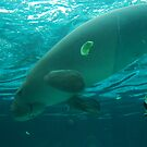 Dugong by Eve Parry