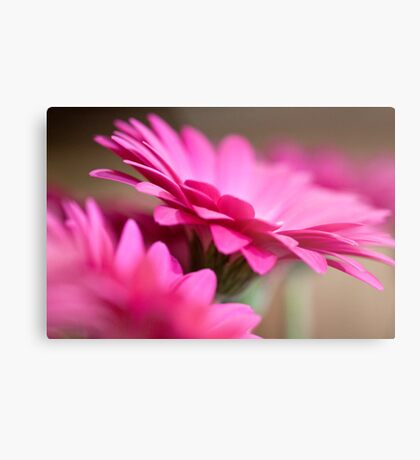 pink gerberas Metal Print