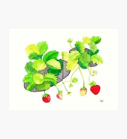 Sketch 18 ... Strawberries Art Print