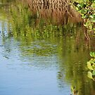Mangrove Dreamtime by Graham Mewburn