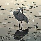 Crane 3 by Sandra Guzman