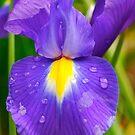 Iris Face by Penny Smith