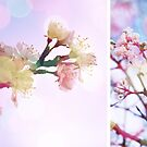 Blossom #3 | Diptych by babibell