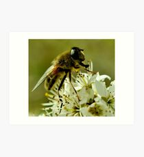 Honey-Bee Art Print