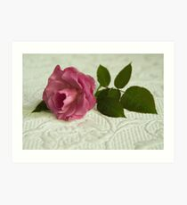 Old fashioned rose Art Print