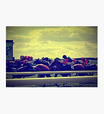The Curragh Photographic Print