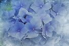 Blue  Moments by Elaine  Manley