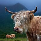Highland Cow, at Sconser. Isle of Skye. Scotland. by Barbara  Jones ~ PhotosEcosse