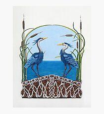 Herons Renewal Photographic Print