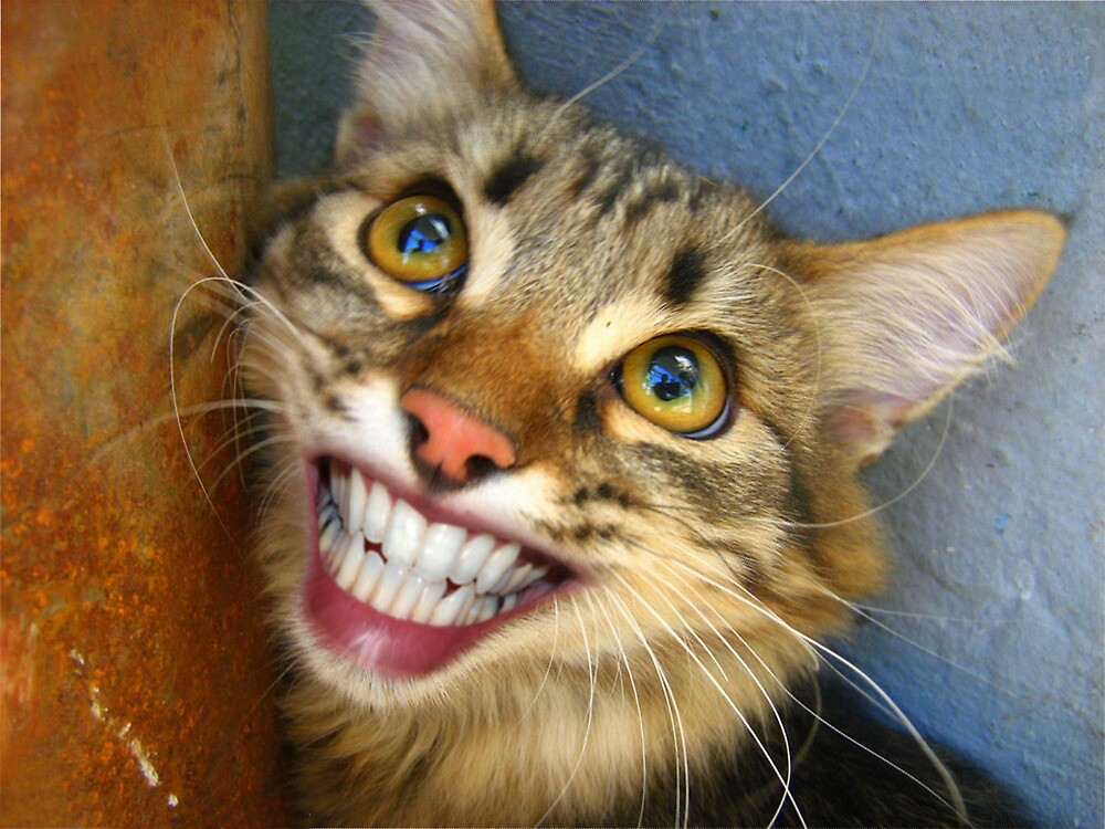 """""""Smiling cat"""" by basil bunni 
