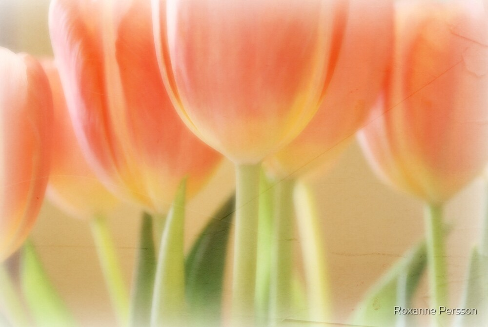 Vintage Tulips by Roxanne Persson