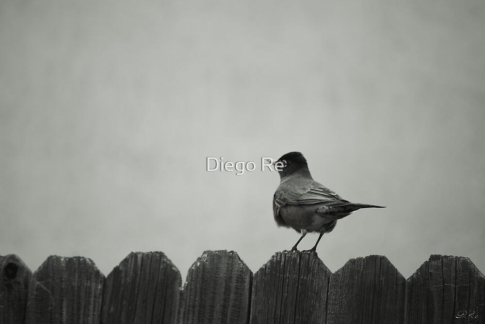 Birdy by Diego Re