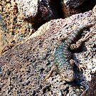 Western Fence Lizard by CarrieAnn