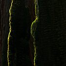 Moss on burned Redwood by Zane Paxton