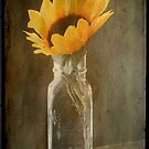 Beauty in a bottle ©  by Dawn Becker