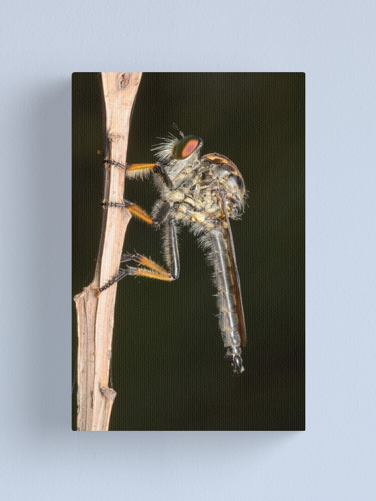 Alternate view of Common Yellow Robberfly - Ommatius sp. Canvas Print