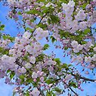Blooming Marvellous! by John Hooton