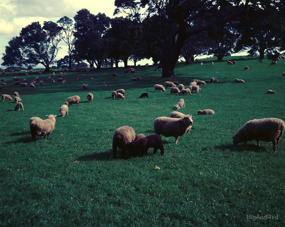 Sheep on One Tree Hill by BigAndRed