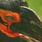 Mask of nature? by shortarcasart