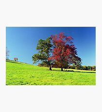 Autumn Trees, New England Photographic Print