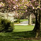 April Blossoms by Gordon Taylor
