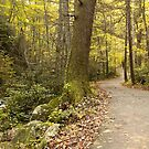 Roaring Fork Nature Trail   by Gary L   Suddath