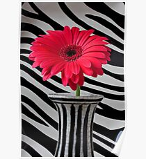 Red Mum In Striped Vase Poster