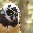 Spectacled Owl by Lolabud