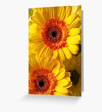 Two Yellow Orange Mums Greeting Card