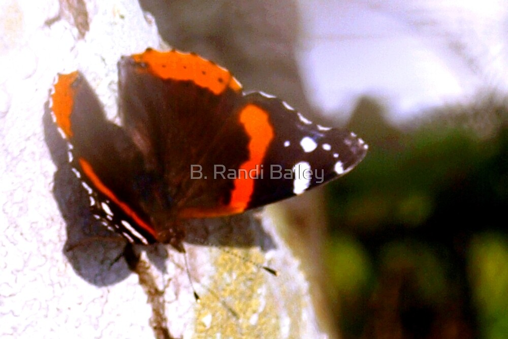 Red admiral butterfly by ♥⊱ B. Randi Bailey