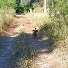 Oscar on a woodsy trail by Ben Waggoner