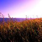 """Waves of Grass"" by waddleudo"