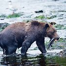 Alaskan Brown Bear with Salmon by Bruce Alexander