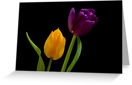 Two Colours by Ray Clarke