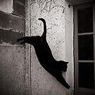 Cat beauty... by Louise LeGresley