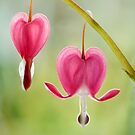 Lonely hearts by Mandy Disher