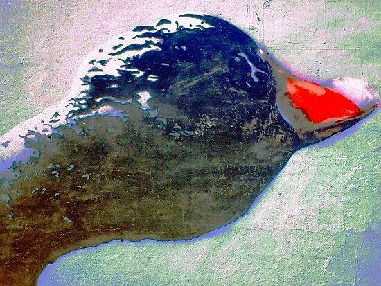 Red beak by Wilhelmina